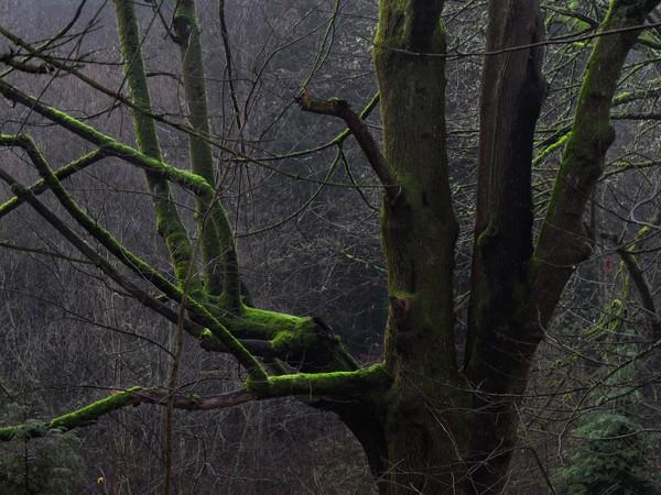 IMG_0024 green tree.jpg
