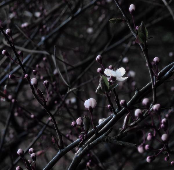IMG_2657 cold spring.jpg