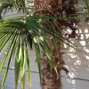 IMG_0541 palm tree
